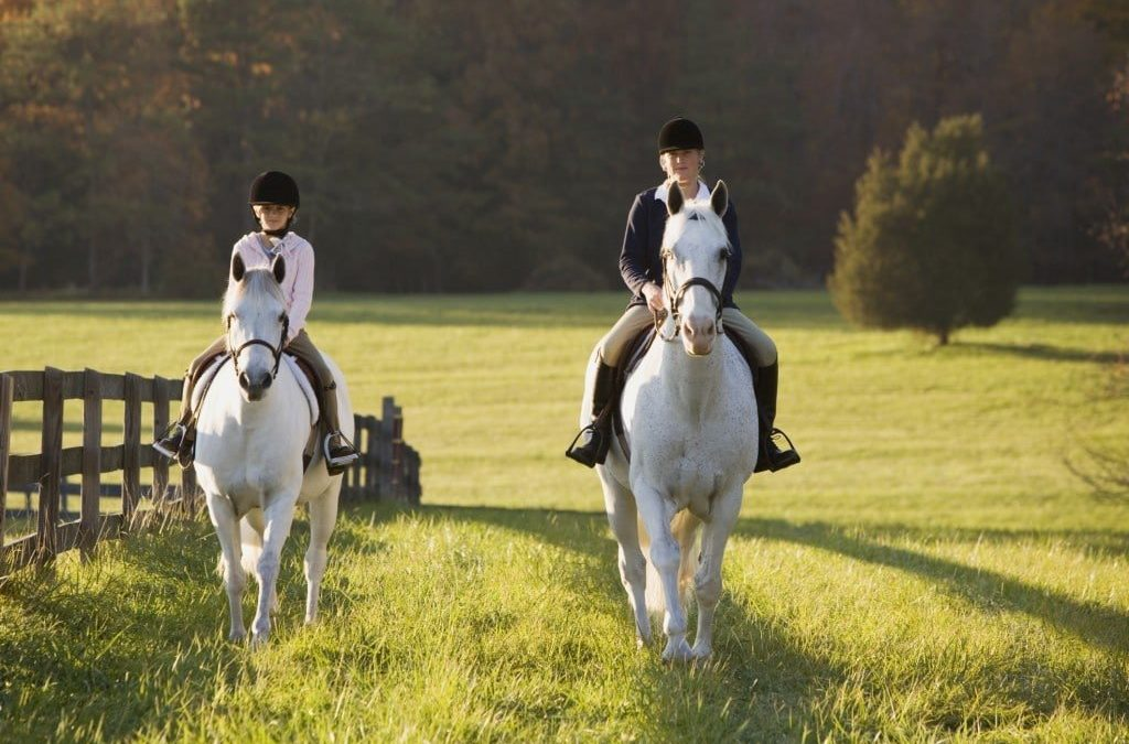 5 Things to Consider When Deciding to Buy Equestrian Insurance