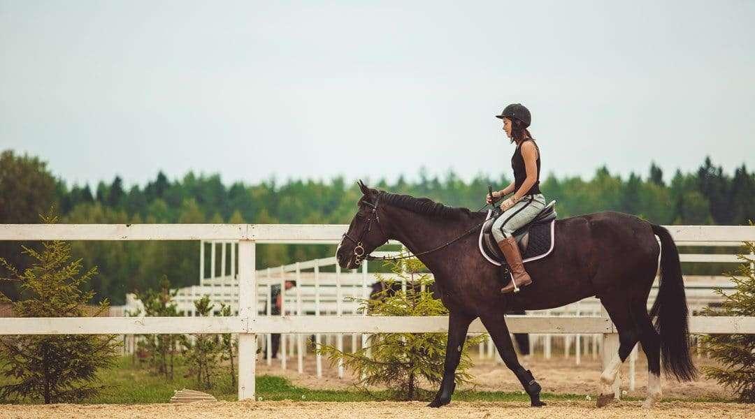 Equine Insurance 101