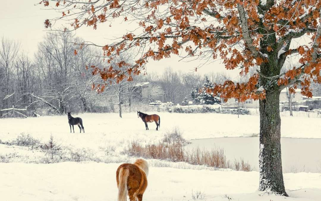 Why Equine Insurance is Critical During the Winter